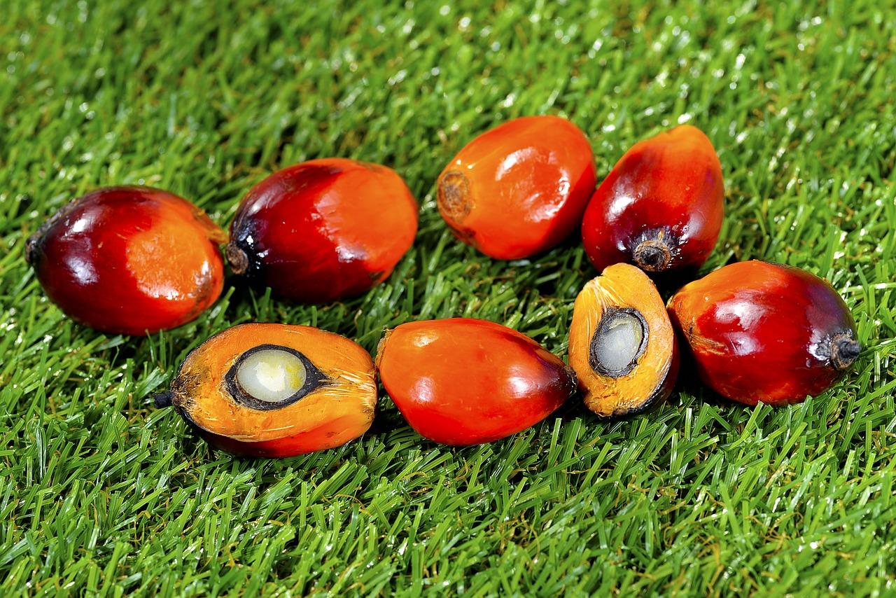 Czy olej palmowy nam szkodzi?