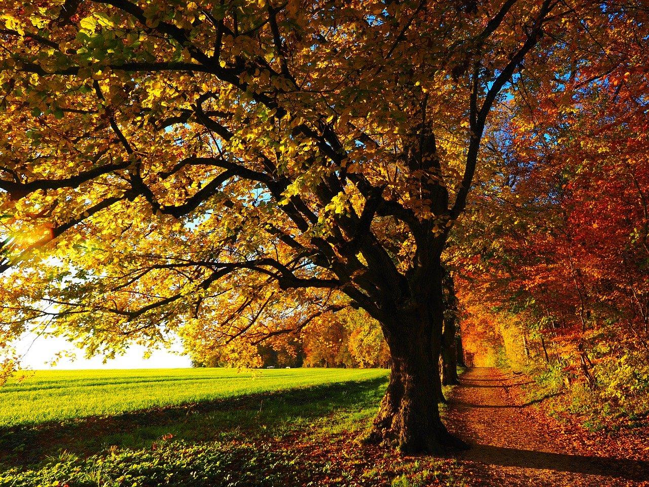 Jak dbać o dobre samopoczucie jesienią?