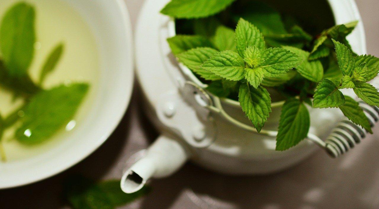 Dlaczego warto korzystać z leków roślinnych?